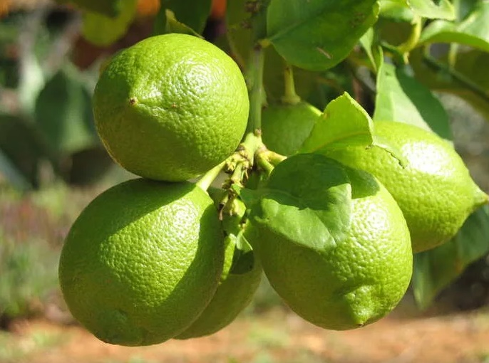 свойства лимонной кислоты